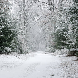 Snow in woodland